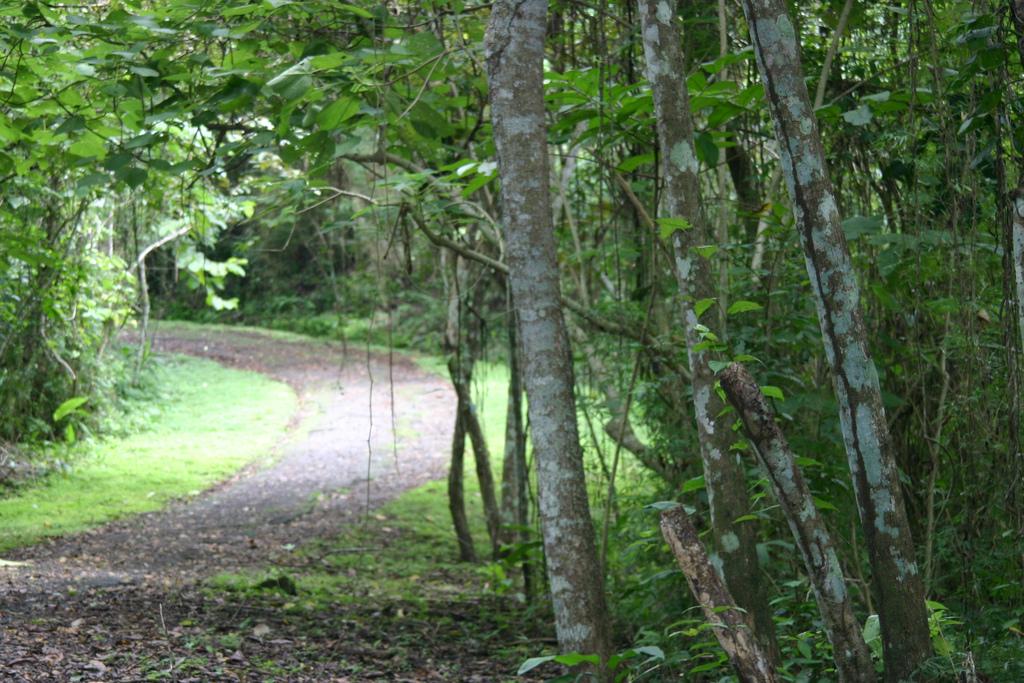 Parque Metropolitano en la ciudad de Panamá. Bosque tropical húmedo